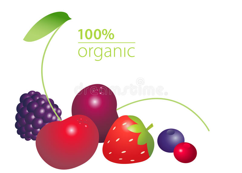 Berries set with 100 per cent organic lettering on white background. Healthy lifestyle concept. Vector illustration stock illustration