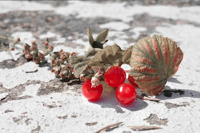 Berries on a stone royalty free stock photography
