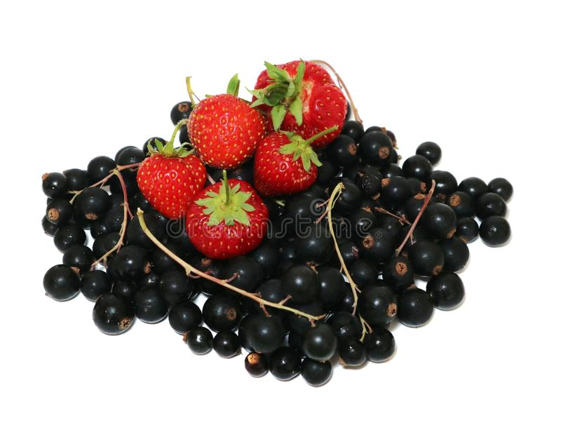 Berries strawberries and black currant with welcome isolated on white. royalty free stock photography