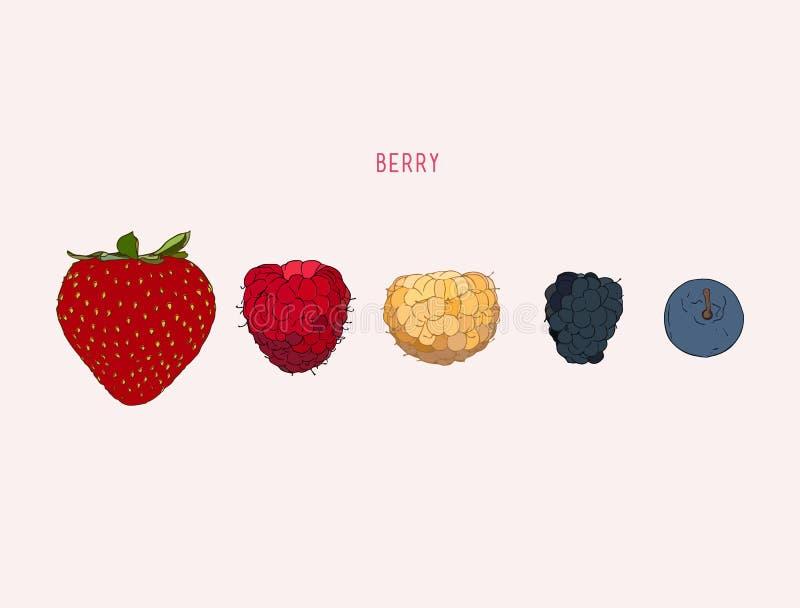 Berries. Vector hand drawn illustration royalty free illustration