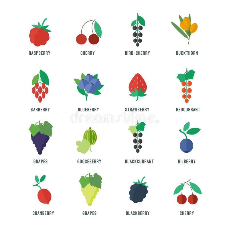 Free Berries Vector Icons Set Royalty Free Stock Image - 49938306
