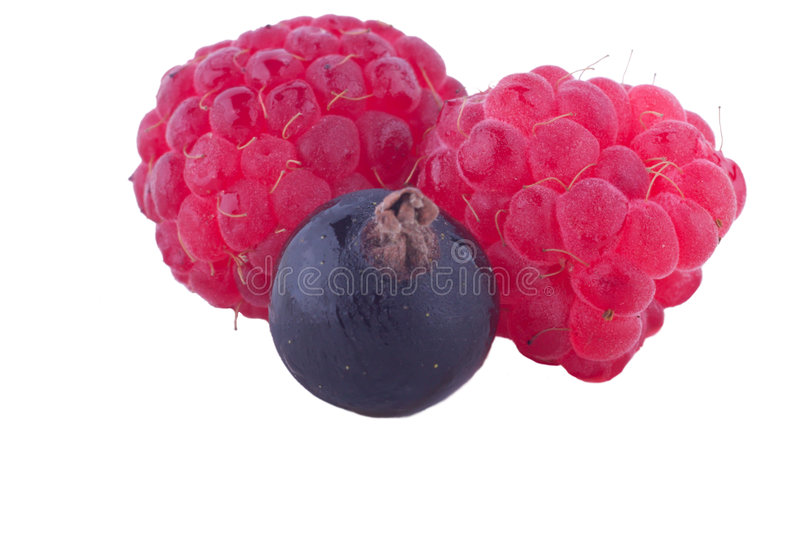 Berries on white royalty free stock image