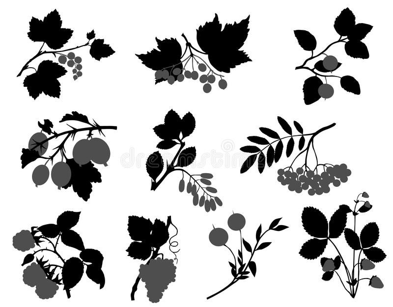 Berry vector illustration