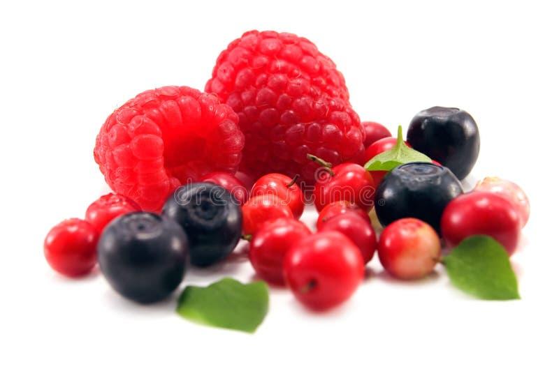berry obrazy royalty free