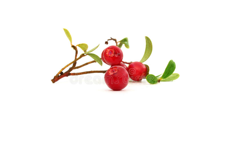 Berry cranberries stock images