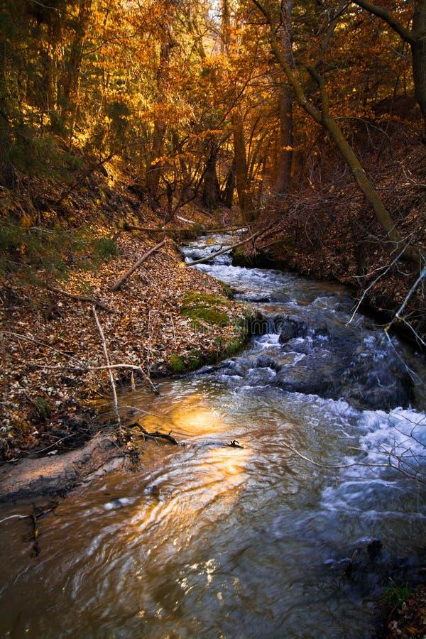 Berry Creek lizenzfreies stockfoto
