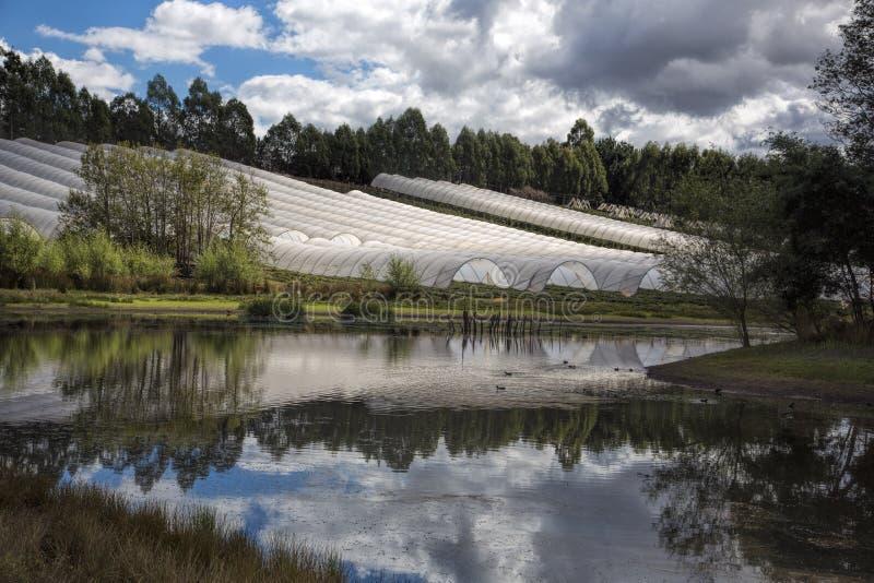 Berry Farming In Tasmania stockfotos