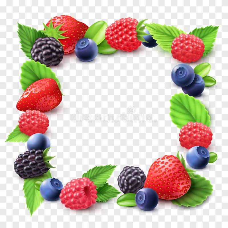 Berry Frame Transparent Illustration lizenzfreie abbildung