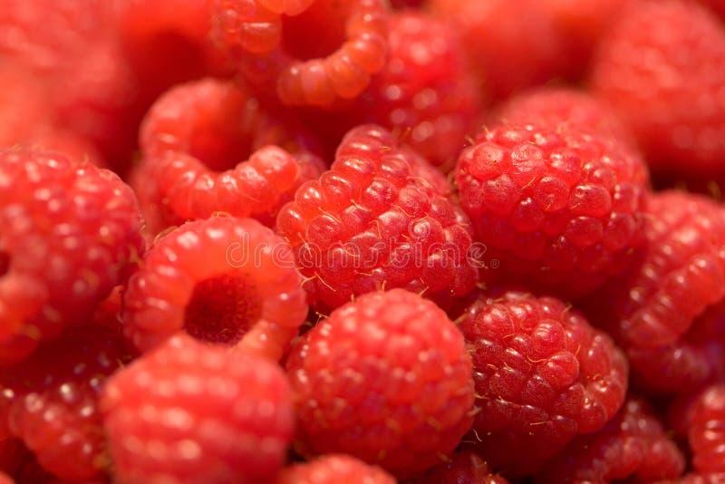 Berry Fruit royalty free stock photo
