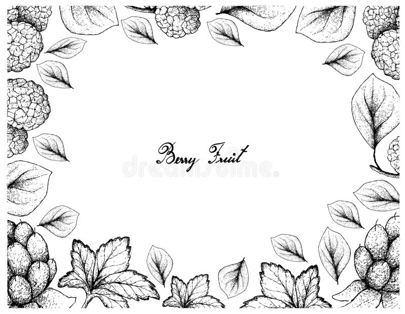 Hand Drawn Frame of Cloudberries and Chinese Mulberries stock illustration