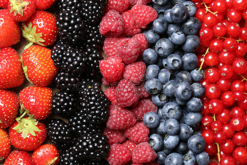 Berry fruits in a row royalty free stock images