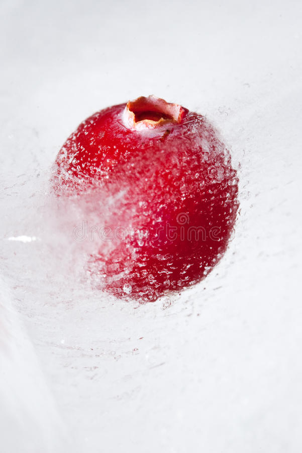 Berry in ice stock photo