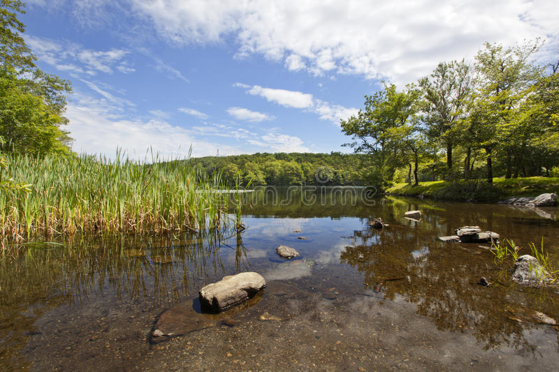 Download Berry pond stock photo. Image of berry, water, trees - 34459176