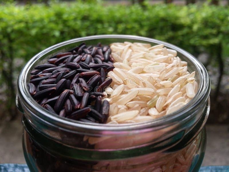 Berry Rice & Ontkiemde Ongepelde rijst royalty-vrije stock foto