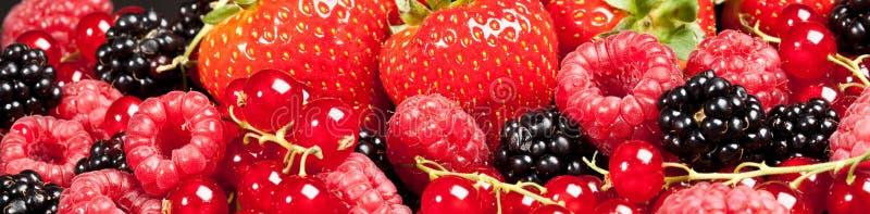 Berrys fotografia stock