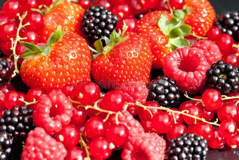 Download Berrys stock photo. Image of raspberry, blackberry, black - 15588150