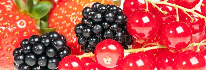 Berrys stockfoto