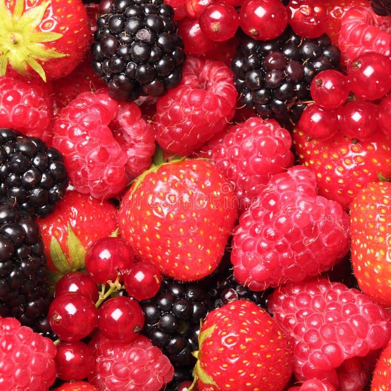 Berryy Fruits Royalty Free Stock Image