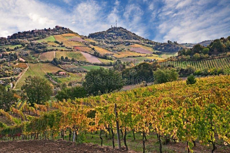 Bertinoro, FC, эмилия-Романья, Италия: ландшафт countrysi стоковые изображения