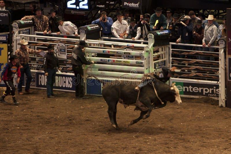 Berufs-Stier-Reiterturnier auf Madison Square Garden stockbilder