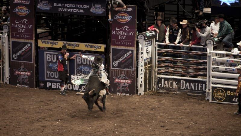 Berufs-Stier-Reiterturnier auf Madison Square Garden stockfotografie