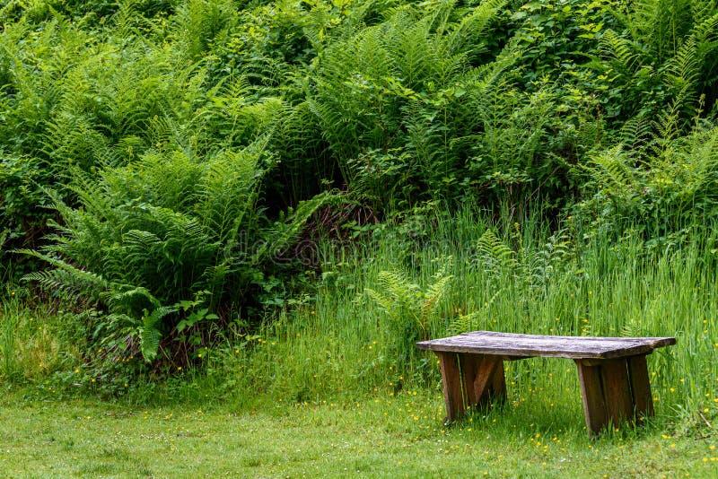 Beruhigende Holzbank in einer Farngrotte, in einem grünen Gras und in Farnen lizenzfreies stockbild