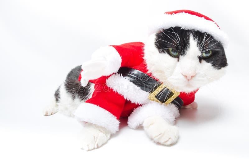 Berusade Santa Claus Cat royaltyfria bilder