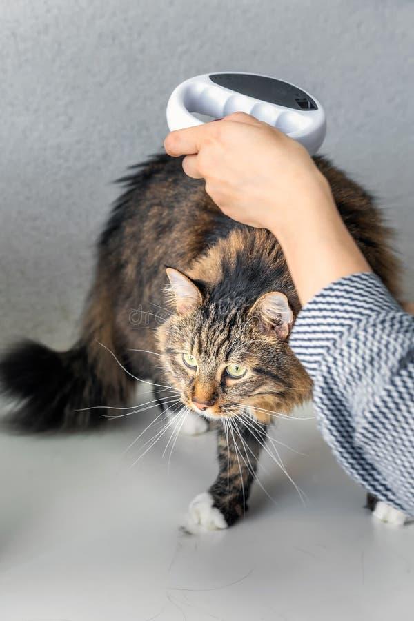 Besök för kattveterinärklinik royaltyfri fotografi