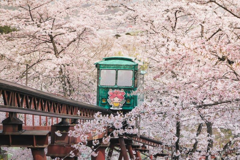 Besökare kommer till funaokaen sendai att beundra den blommande Sakuraen Och imponerat med spårvagnen för att tjäna som turister  arkivbilder
