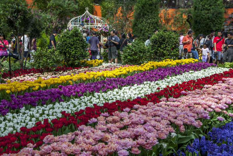 Besökare till trädgårdarna vid fjärden i Singapore beundrar den härliga tulpanskärmen arkivfoto