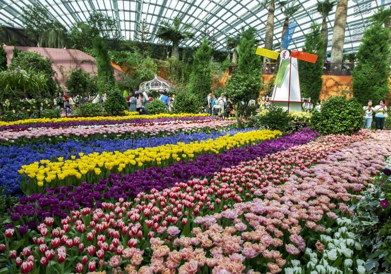 Besökare till trädgårdarna vid fjärden i Singapore beundrar den härliga tulpanskärmen arkivfoton