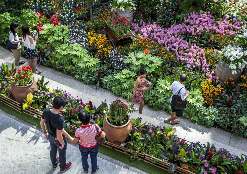 Besökare till trädgårdarna vid fjärden i Singapore beundrar den härliga växtskärmen arkivbilder