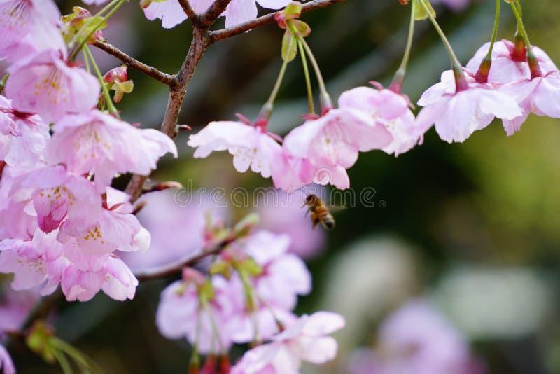 Beschäftigte Biene auf Frühling stockfoto