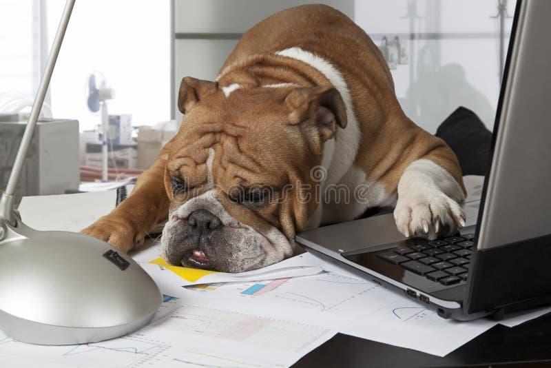 Beschäftigter Tag im Büro lizenzfreies stockfoto