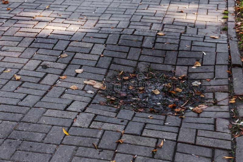 Beschadigde die asfaltweg met potholes, door freeze-thaw cycli in de winter wordt veroorzaakt slechte weg Gebroken bestratingenst royalty-vrije stock fotografie