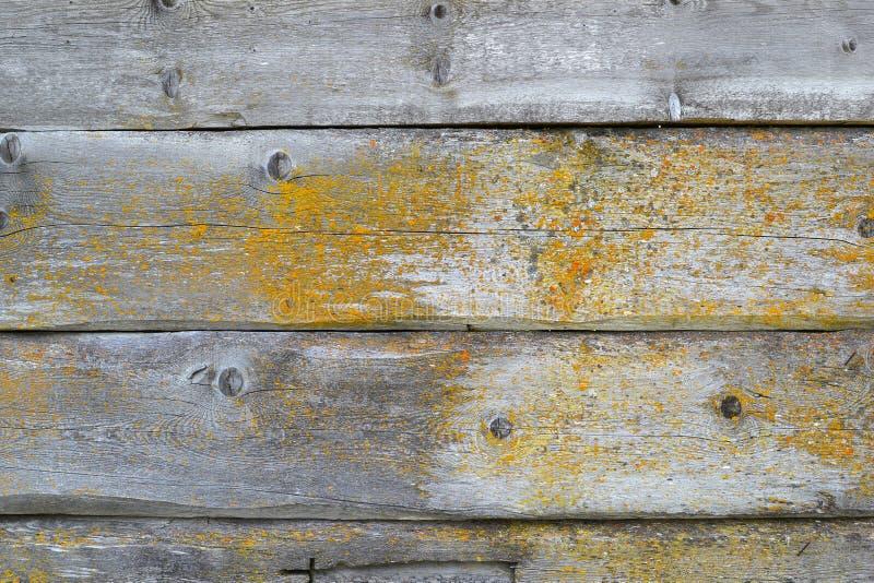 Beschaffenheit 8395 Österreich - Holz stockfotografie