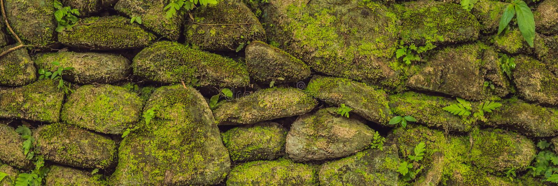 Beschaffenheit der alten Steinwand bedeckte grünes Moos im Fort FAHNE Rotterdams, Makassar - Indonesien-, langes Format stockbild