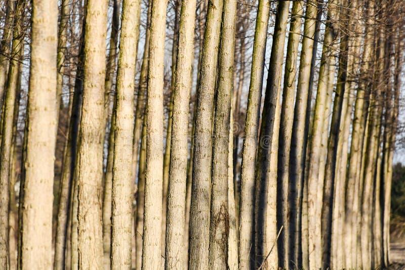 Beschaffenheit der Barke des Baums, Foto als Hintergrund vektor abbildung