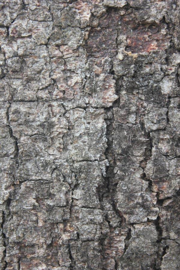 Beschaffenheit der Baumrinde lizenzfreies stockbild