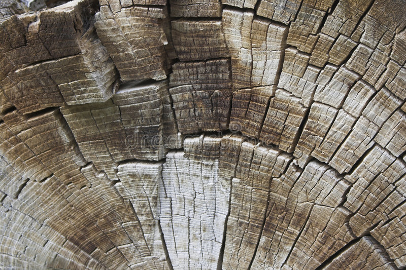 Beschaffenheit der Baumringe stockfotos