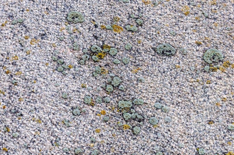 Beschaffenheit der Granitplatte mit Flechte lizenzfreie stockbilder