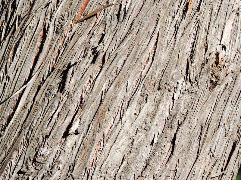 Beschaffenheit der hölzernen Barke des Zypressenbaums stockbild