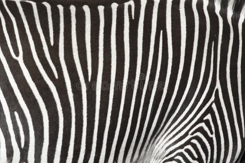 Beschaffenheit der Haut eines Zebra. stockfotos