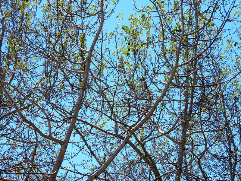 Beschaffenheit der kahlen Bäume lizenzfreies stockfoto