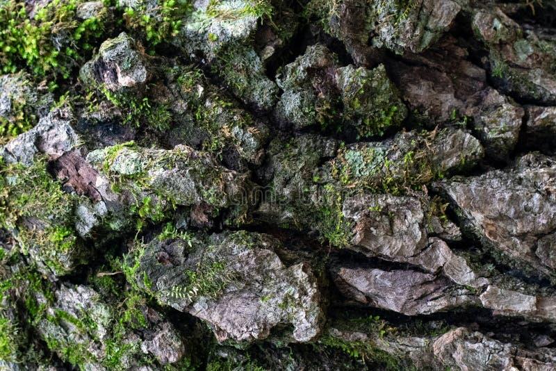 Beschaffenheit der Naturholzbarke im Abschluss oben lizenzfreies stockfoto