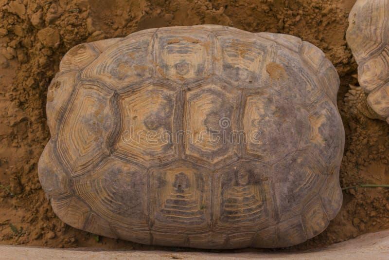 Beschaffenheit der Schildkrötenschale lizenzfreie stockbilder