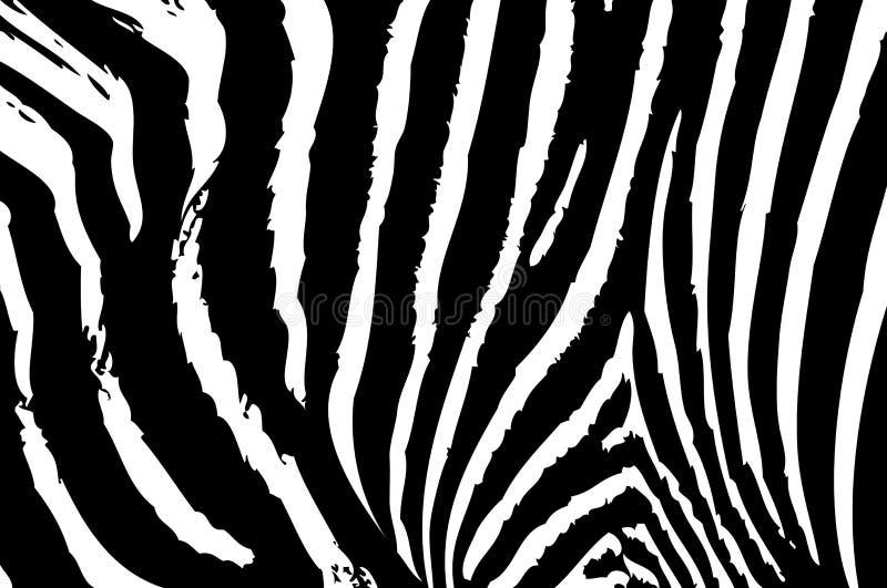 Beschaffenheit der Zebrahaut vektor abbildung