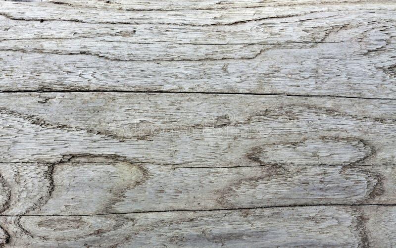 Beschaffenheit des alten Klotzes stockfotografie