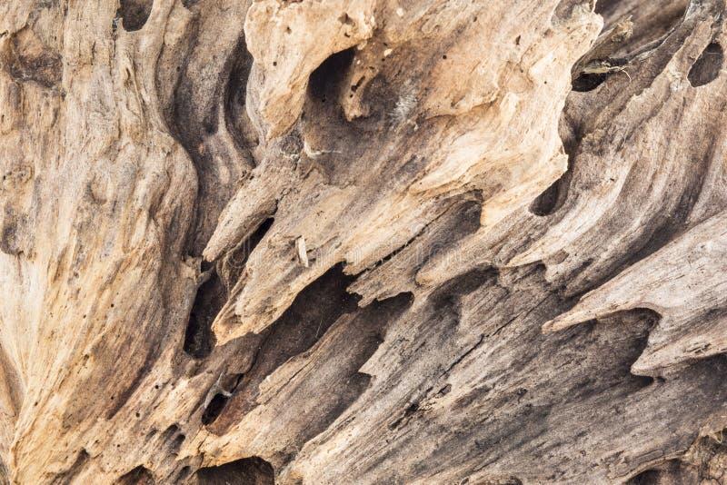 Beschaffenheit des alten verwitterten Holzes, trockener Baumstumpf eines Koniferenbaums, Abschluss herauf Kunstzusammenfassungshi stockfotos