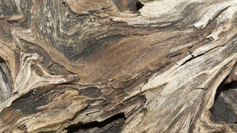 Beschaffenheit des alten verwitterten Holzes, trockener Baumstumpf eines Koniferenbaums, Abschluss herauf Kunstzusammenfassungshi stockbild